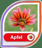 Bild für Kategorie Apfeltraum