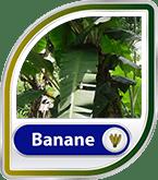 Bild für Kategorie Bananentee