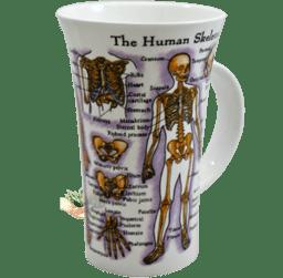 Bild von Dunoon Glencoe Human Body