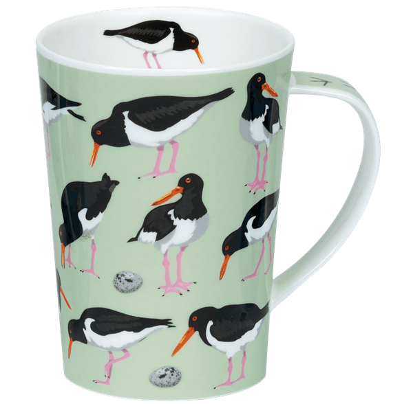 Bild von Dunoon Argyll Bird World Oystercatchers