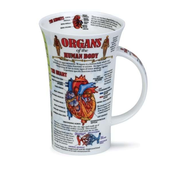 Bild von Dunoon Glencoe Organs of the human body