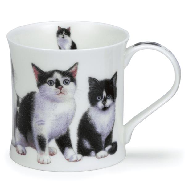 Bild von Dunoon Wessex Kittens Black/White
