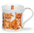 Bild von Dunoon Wessex Kittens Ginger