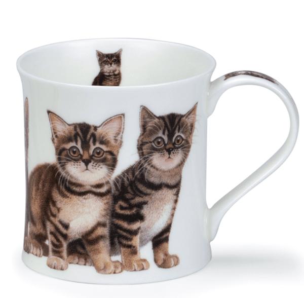 Bild von Dunoon Wessex Kittens Tabby