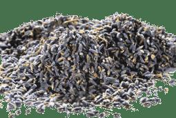 Bild von Lavendelblüten ganz - tiefblau Spitzenqualität französisch